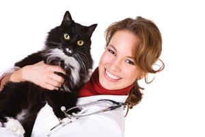 Профилактика сахарного диабета у кошек