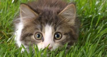 Красивые клички для кошек