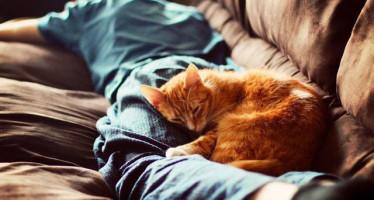 Почему кошки любят спать на людях и в ногах