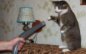 Почему кошки боятся пылесосов