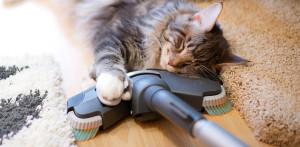 Кошка и пылесос или как помирить свою кошку с пылесосом