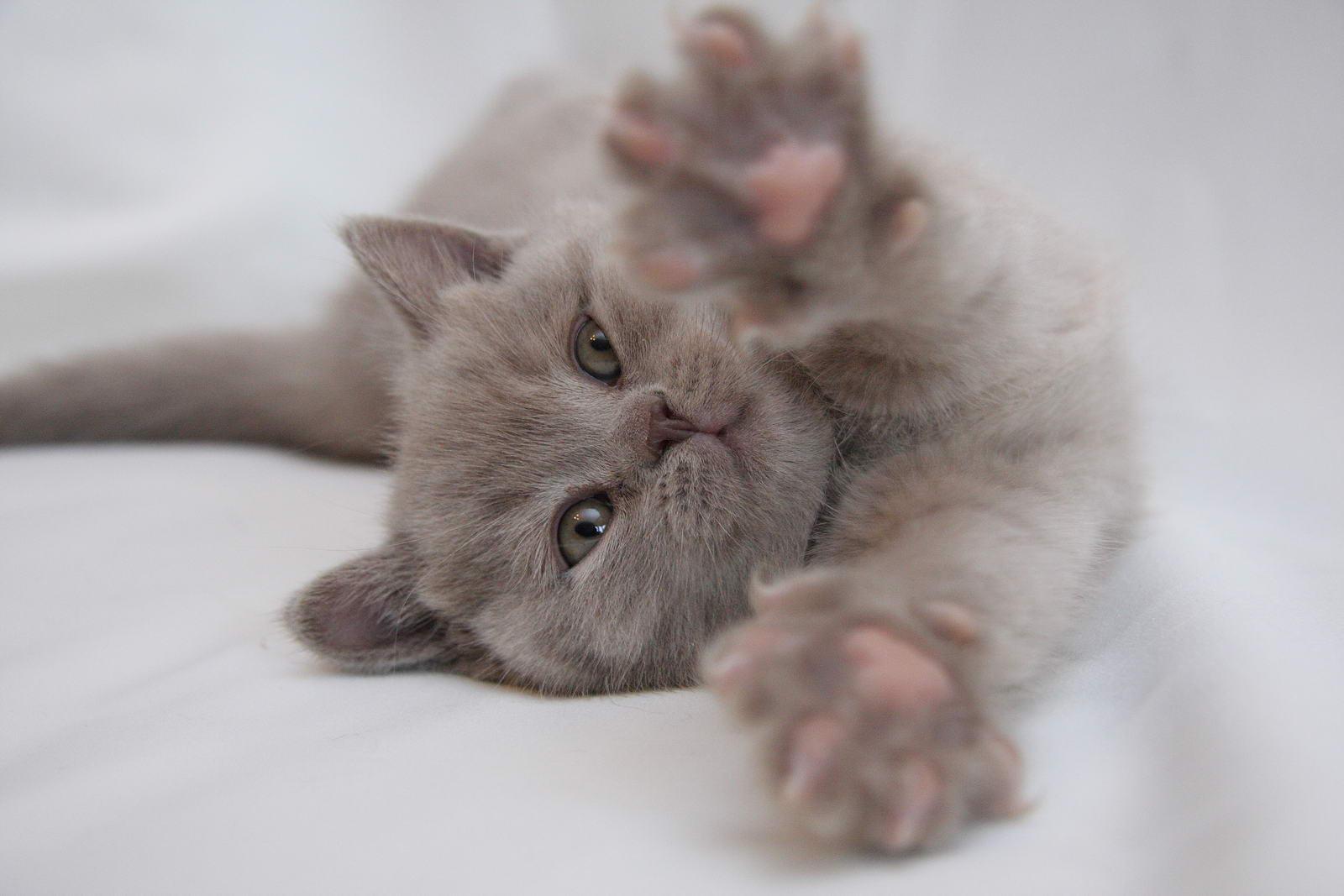мозаика картинки скучающий котенок номер удобствами