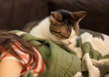 Почему кошки спят на людях