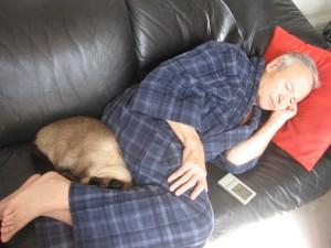 Кошка спит рядом с человеком в ногах