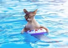 Причины по которым кошка боится воды