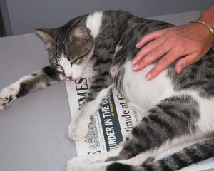 Этапы беременности у кошек