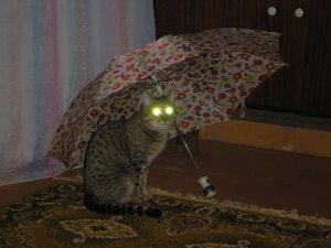 Отчего светятся кошачьи глаза