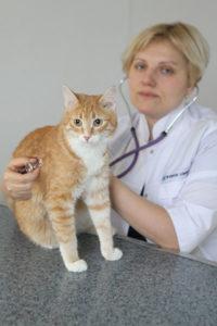 Ветеринар о Фоспасиме для кошек