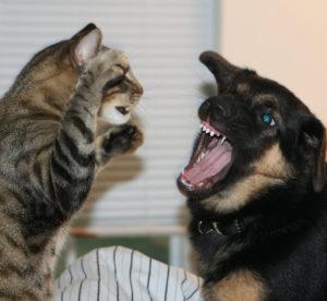 Кот и собака не ладят