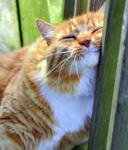 Частые течки у кошки