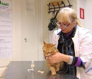 Лечение катаракты у кошек.