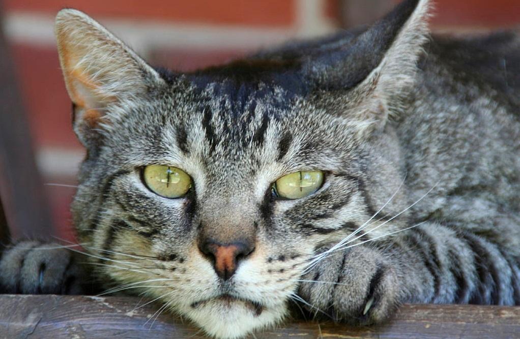 Последствия лейкемии кошек