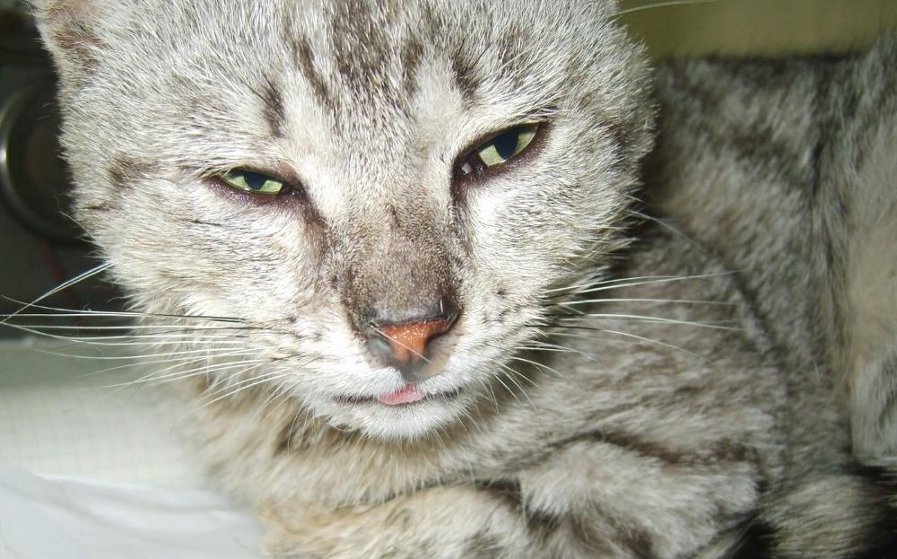 У кошки насморк