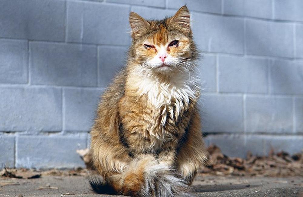 Грязная кошка