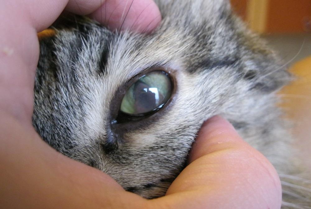 Глаз кота