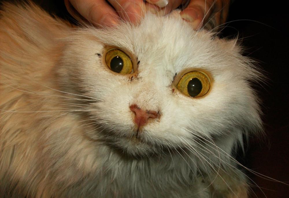 У кошки желтуха