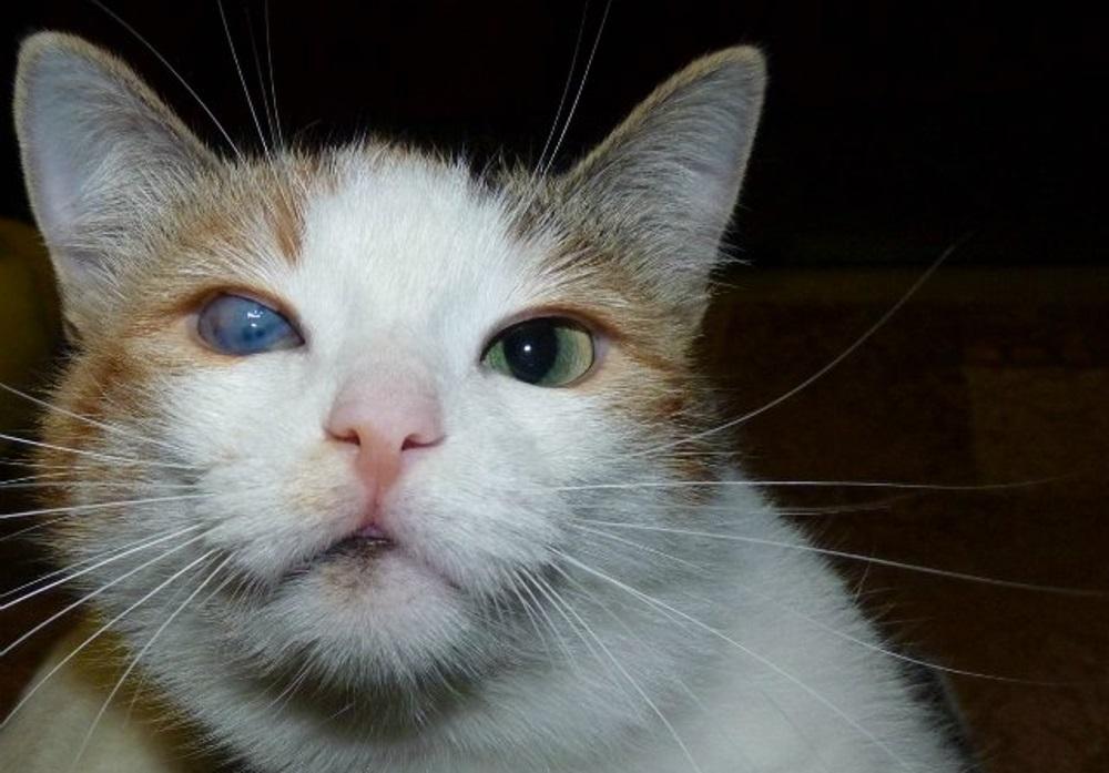 Кот с мутным глазом