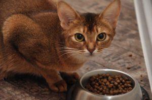Кошка с кормом