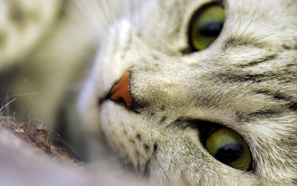 Кошачья морда