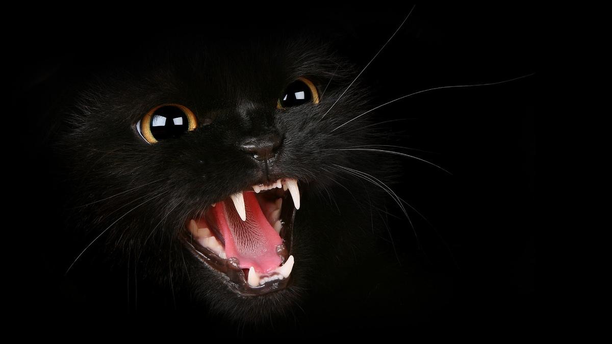 У кошки выпадают зубы