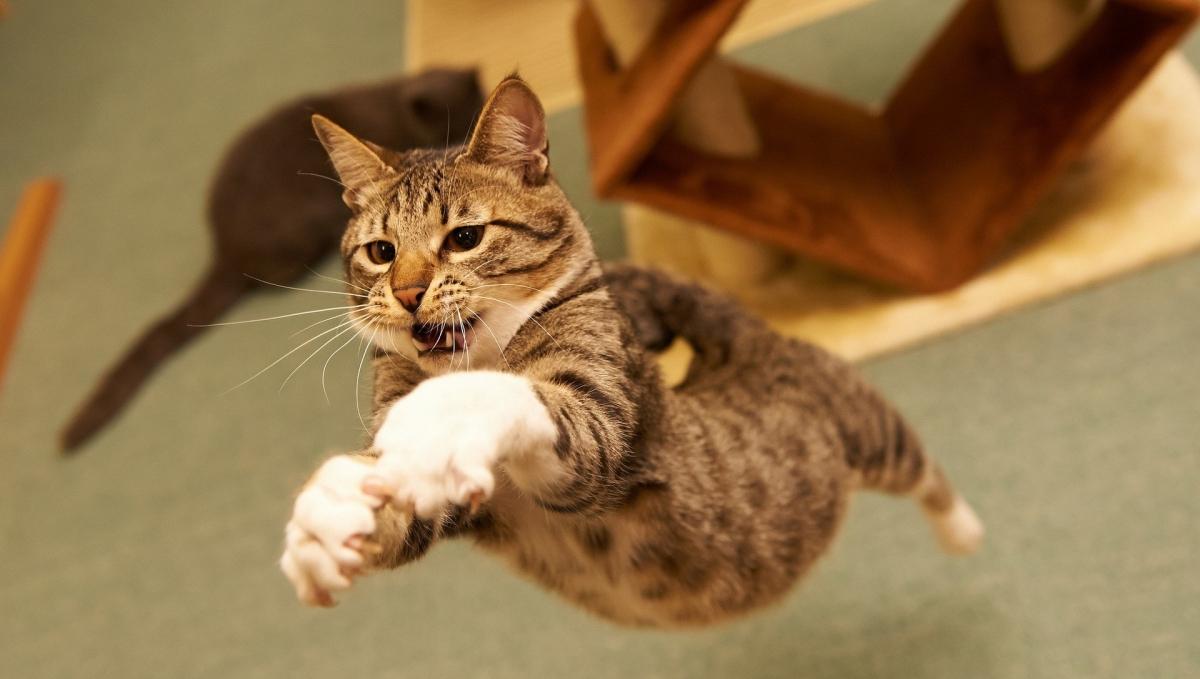 Блохнэт для кошек