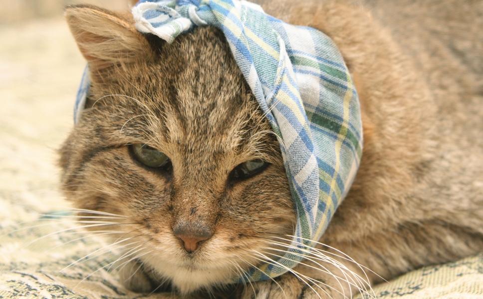 Капли суролан для кошек