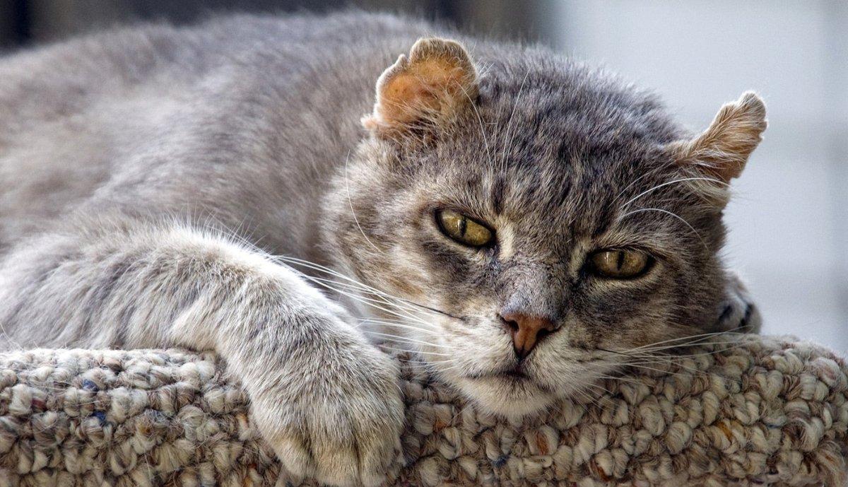 Сульф 120 для кошек