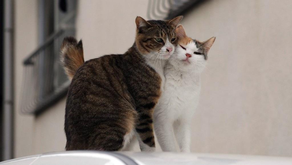 Экс 5 для кошек