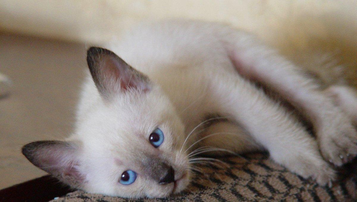 Гепатолюкс для кошек