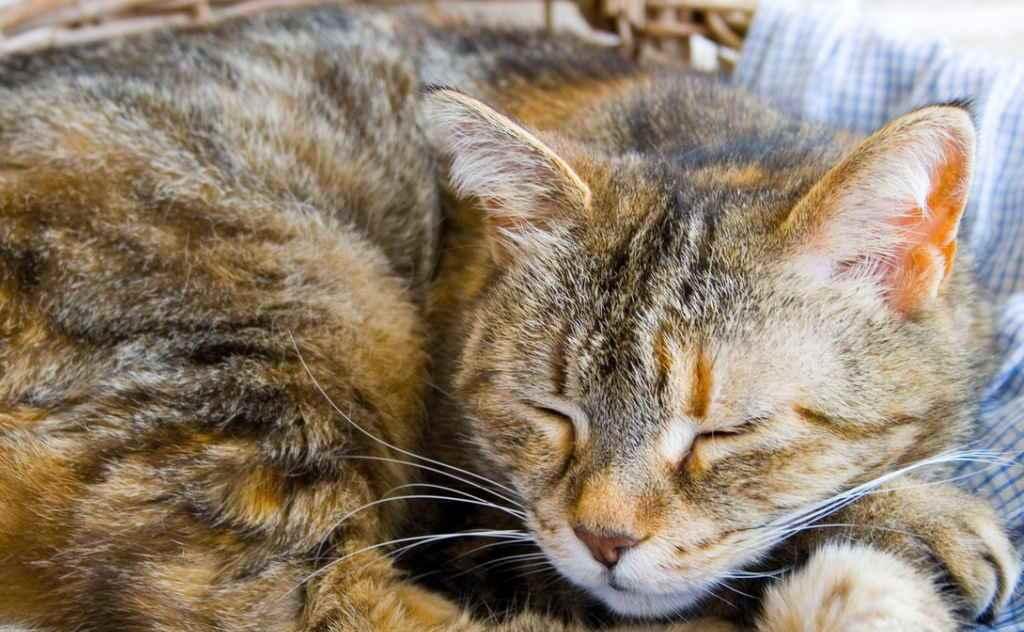 Норокарп для кошек