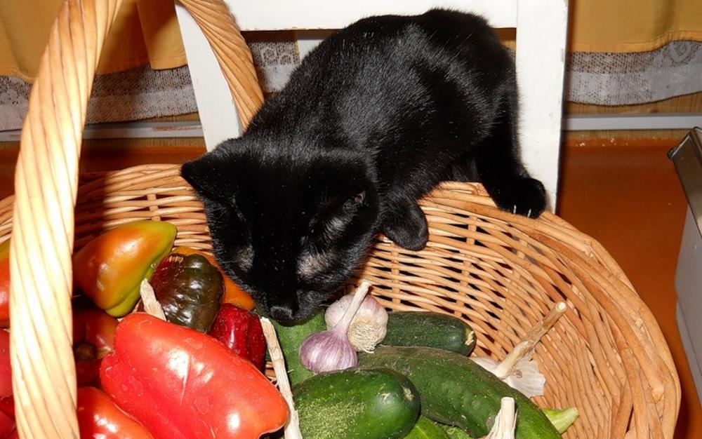 Кошка и овощи