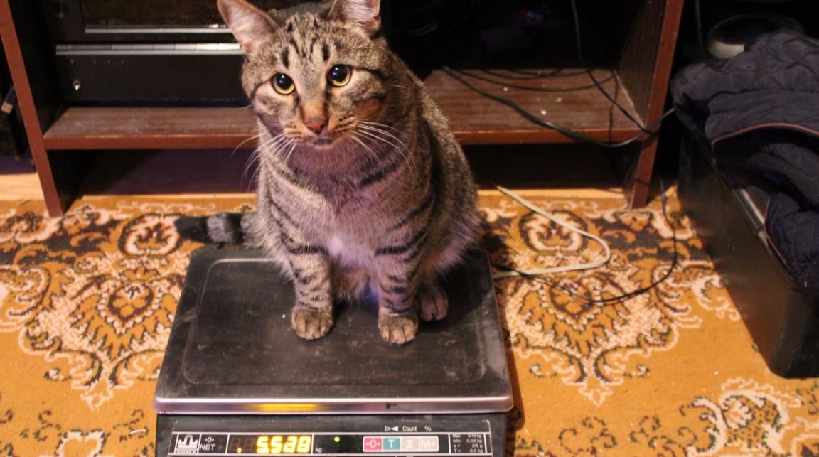 Нороклав для кошек