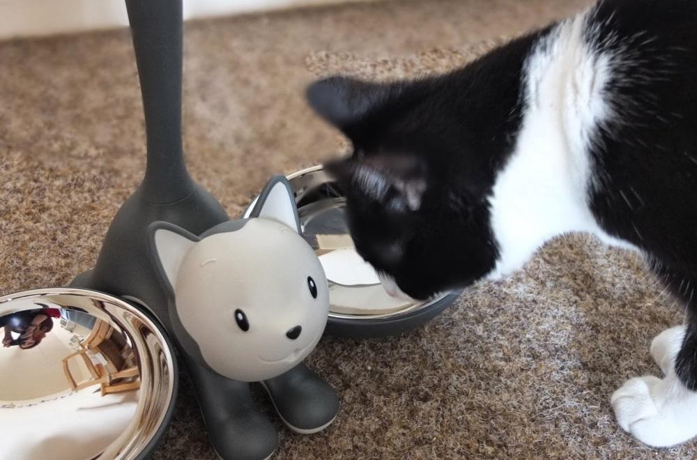 Кошка около миски