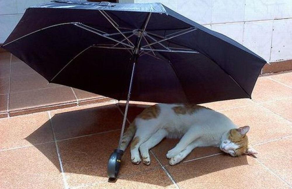 Кошка под зонтом