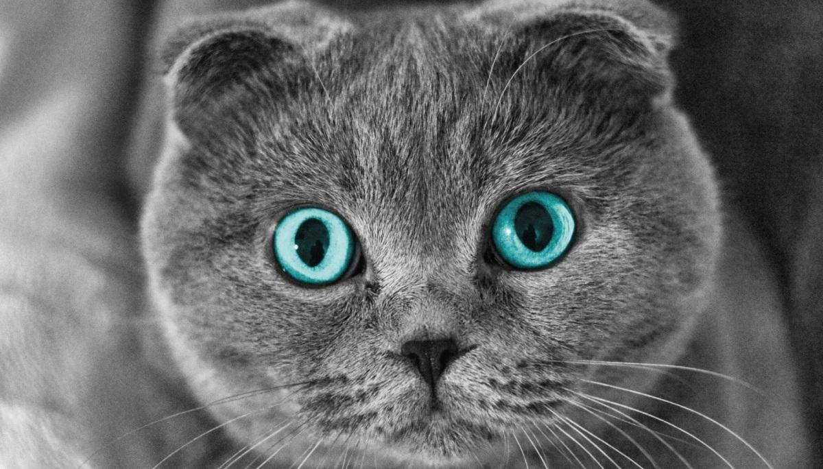 Ирис для кошек