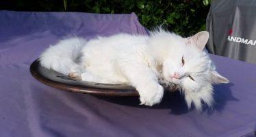 Ветспокоин для кошек