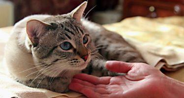 Уход за кошкой после стерилизации