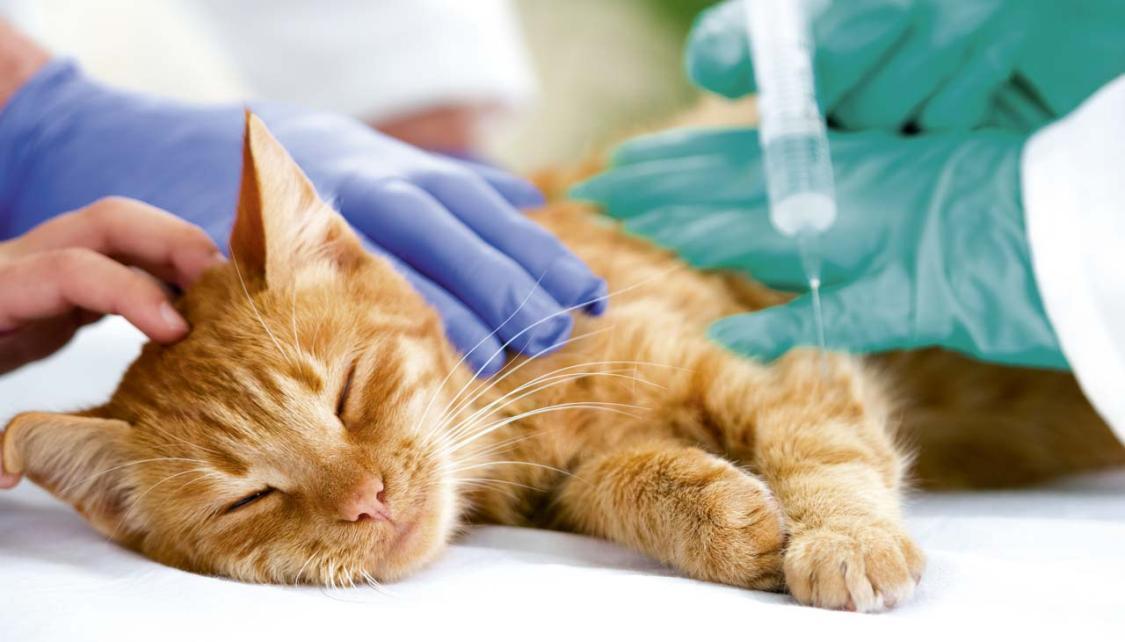 Обезболивающее для кошек