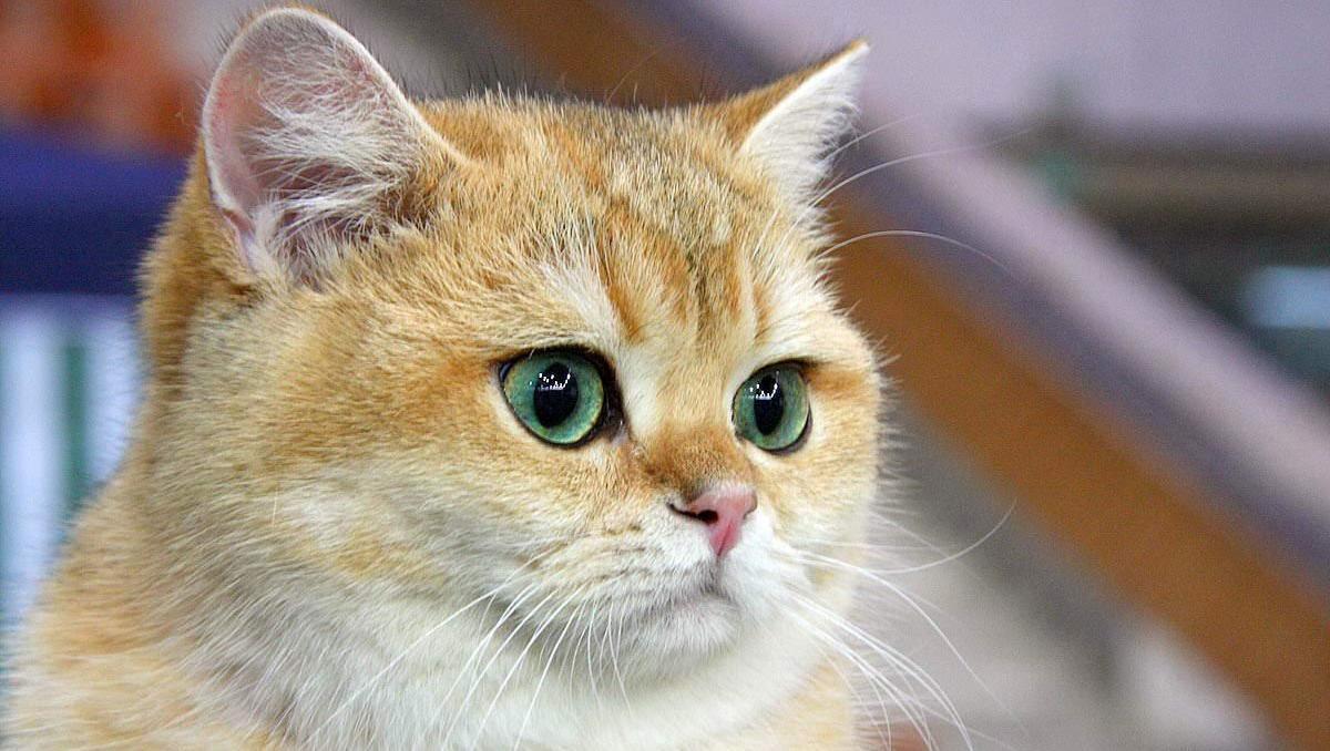 Тетрациклиновая мазь для кошек