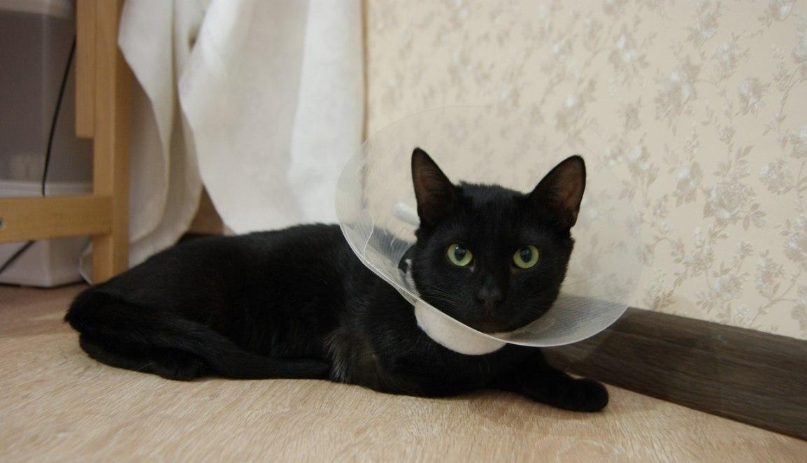 Антибиотики для кошек