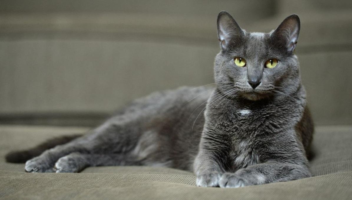 Цамакс для кошек