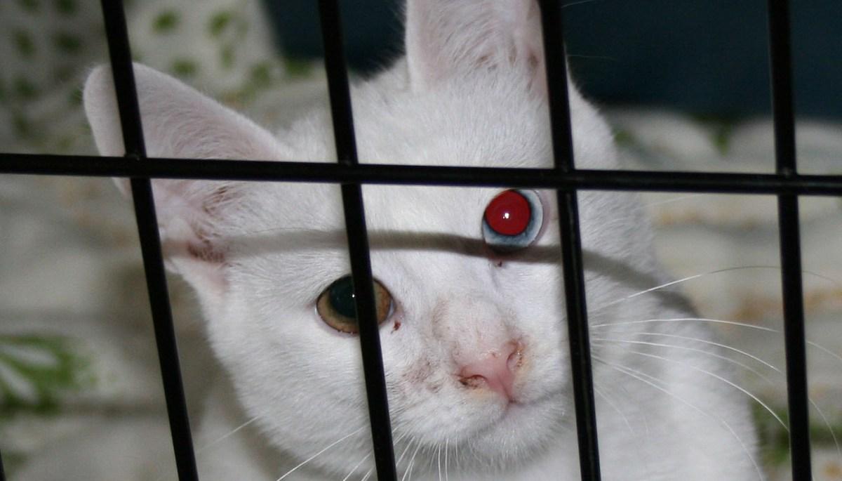 Сотрясения мозга у кошек
