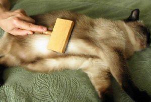Кошку вычесывают
