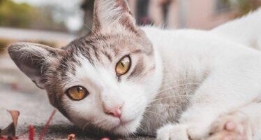 Куда пропадают коты в частном доме?