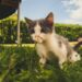 Кот сильно чихает — как исключить коронавирус?