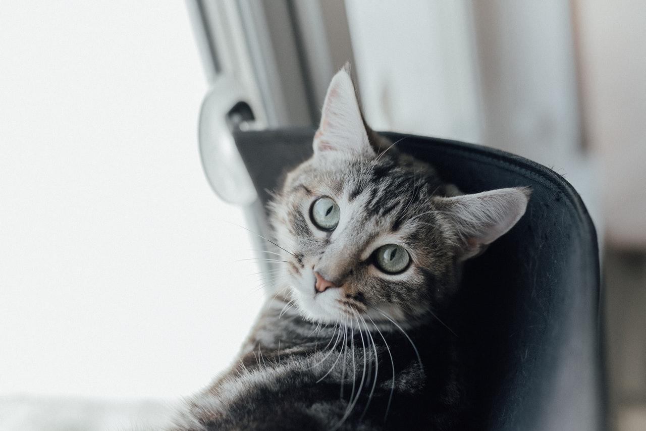 Чем опасно для кошки падение с разной высоты