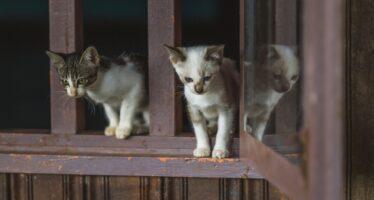 Кошка упала с 5 этажа: причины, травмы, защита от падения