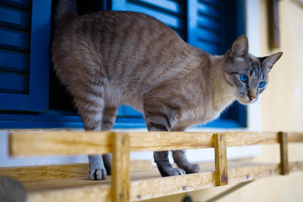 Как предотвратить падение кошки из окна?