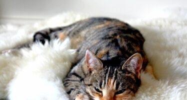 Клички для кошек девочек необычные красивые