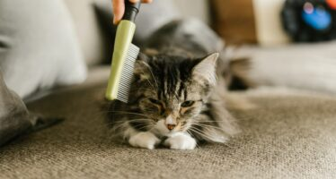Домашние кошки без породы